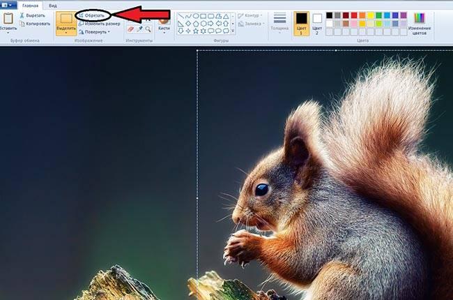 Как обрезать фото в paint 3х4