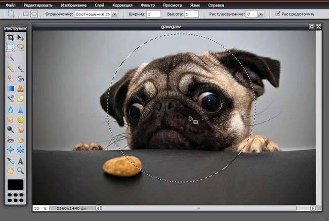 Как обрезать фото по кругу в powerpoint